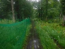 大清水湿原